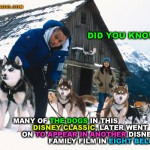 """Did you Know? Many of the Dogs Used in this Disney Classic were also used in the Disney Family Fun Film Eight Below"""