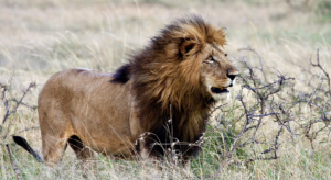 The Lion Recovery Fund