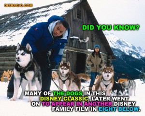 """""""Did you Know? Many of the Dogs Used in this Disney Classic were also used in the Disney Family Fun Film Eight Below"""""""